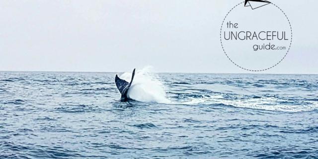 "<img src=""images/"" width=""800"" height=""600"" alt=""puerto lópez - 2017 10 08 19 890852215 - Ecuador: Whale Watching in Puerto López""> <img src=""images/"" width=""800"" height=""600"" alt=""ecuador - 2017 10 08 19 890852215 - Ecuador"">"