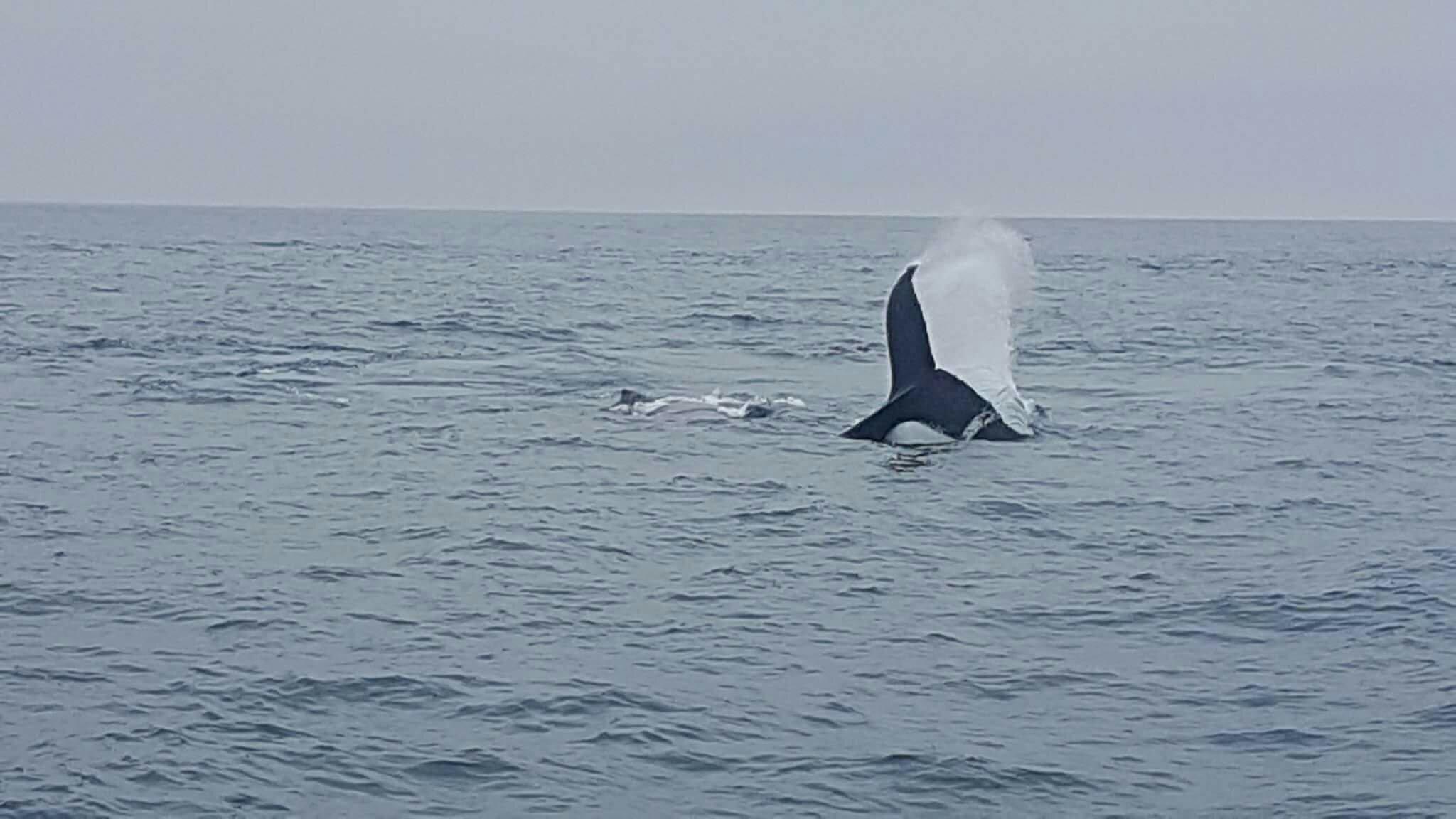 "<img src=""images/"" width=""800"" height=""600"" alt=""puerto lópez - received 10154779618555636 52523866 - Ecuador: Whale Watching in Puerto López"">"